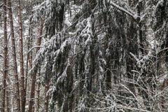 Forêt d'hiver avec la neige sur les branches air givré en parc parmi les arbres promenades confortables en hiver la neige à parti photographie stock