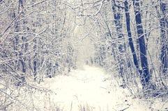 Forêt d'hiver avec le chemin couvert de neige Photo libre de droits