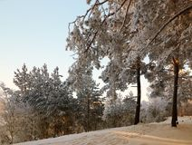 Forêt d'hiver avec les branches couvertes de neige des arbres beauté féerique Images libres de droits