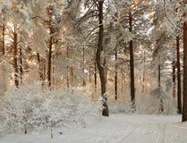 Forêt d'hiver avec les branches couvertes de neige des arbres beauté féerique Photographie stock libre de droits