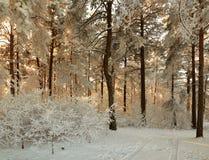 Forêt d'hiver avec les branches couvertes de neige des arbres beauté féerique Image stock