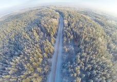 Forêt d'hiver avec une vue de primevère farineuse Photographie stock