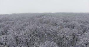 Forêt d'hiver dans la neige clips vidéos