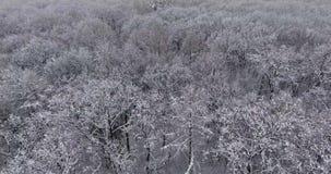 Forêt d'hiver dans la neige banque de vidéos