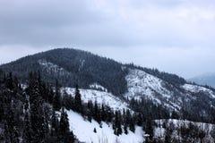 Forêt d'hiver dans le carpathien images libres de droits