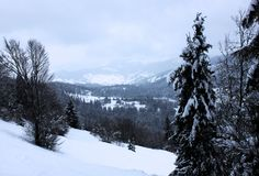 Forêt d'hiver dans le carpathien photographie stock