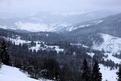 Forêt d'hiver dans le carpathien image libre de droits