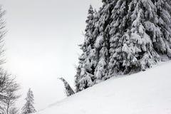 Forêt d'hiver dans le carpathien photographie stock libre de droits