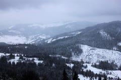 Forêt d'hiver dans le carpathien image stock