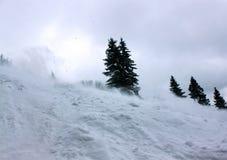 Forêt d'hiver dans le carpathien photo stock