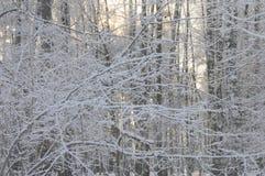 Forêt d'hiver dans le gel de matin Images libres de droits