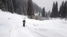 Forêt d'hiver dans les montagnes banque de vidéos