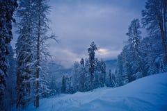 Forêt d'hiver dans les montagnes Photographie stock