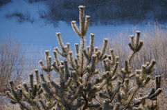 Forêt d'hiver dans Vologda Images libres de droits