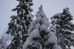 Forêt d'hiver dans Vologda Photos libres de droits