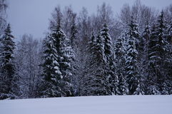 Forêt d'hiver dans Vologda Image libre de droits