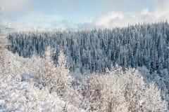Forêt d'hiver de Colombie-Britannique du nord, Canada Photo libre de droits