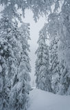 Forêt d'hiver de conte de fées Image stock