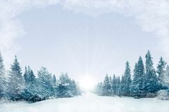 Forêt d'hiver de fond, Noël Photographie stock libre de droits