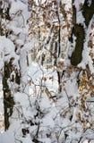 Forêt d'hiver de Milou, paysage naturel saisonnier Images stock