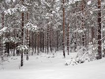 Forêt d'hiver en dehors de Hudiksvall - Swden Images stock