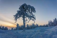 Forêt d'hiver en Finlande du nord photographie stock libre de droits
