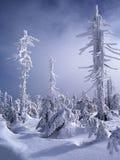Forêt d'hiver en montagnes de Jizera, Pologne Photographie stock libre de droits