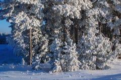 forêt d'hiver et champ couvert de neige Photographie stock
