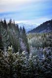 Forêt d'hiver et montagne d'hiver Photos libres de droits