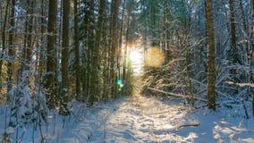 Forêt d'hiver et soleil, temps-faute d'inclinaison banque de vidéos