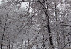 Forêt d'hiver, neige blanche, arbres dans la neige, gel, silence, landscap neigeux image libre de droits