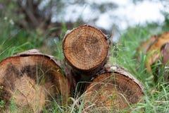 Forêt d'identifiez-vous de peuplier photographie stock libre de droits
