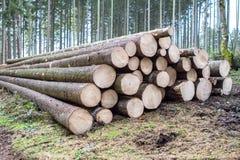 Forêt d'identifiez-vous de pin image stock