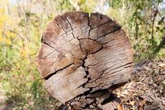 Forêt d'identifiez-vous de pin photographie stock libre de droits