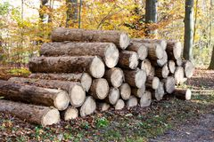Forêt d'identifiez-vous en bois de pin image stock
