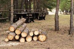 Forêt d'identifiez-vous en bois de pin photo libre de droits