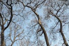 Forêt d'imagination photo libre de droits