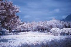 Forêt d'IR Images libres de droits