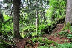 Forêt d'Italiano Image libre de droits