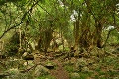 Forêt d'Ombu Image libre de droits