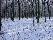 Forêt d'Ukrainien d'hiver Polesya L'Ukraine 2017 Images stock