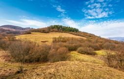 Forêt d'un côté de colline de montagne Photographie stock libre de droits