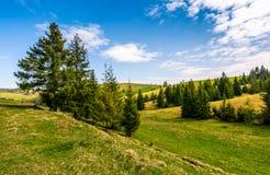Forêt d'un côté de colline de montagne Photo stock