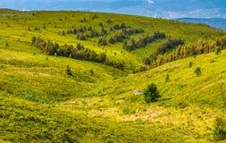 Forêt d'un côté de colline de montagne Image stock