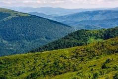 Forêt d'un côté de colline de montagne Photographie stock