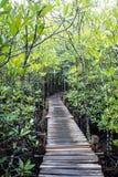 Forêt d'usine de Taboon Image libre de droits