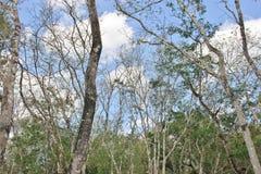 Forêt dans Chichen Itza Yucatan Mexique Photo libre de droits
