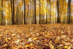 Forêt dans des couleurs d'automne Photographie stock