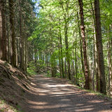 Forêt dans Harz Allemagne Photo libre de droits
