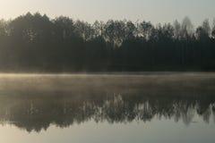 Forêt dans l'eau de miroir Photo stock